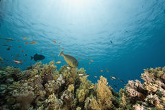 Corallo e pesci Fotografie Stock
