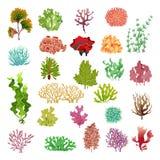Corallo ed alga Flora subacquea, fuco e coralli del gioco dell'acquario delle alghe dell'acqua di mare Insieme di vettore delle p illustrazione vettoriale