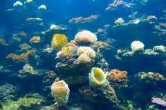 Corallo ed oceano Fotografia Stock