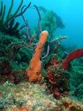 Corallo ed operatore subacqueo Fotografia Stock Libera da Diritti