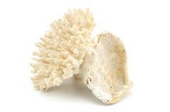 Corallo isolato su priorità bassa bianca Fotografia Stock Libera da Diritti
