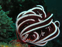 Corallo molle, mare della Tailandia Fotografie Stock Libere da Diritti