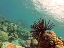 Corallo molle sulla Grande barriera corallina immagini stock libere da diritti
