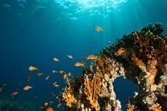 Corallo, oceano e pesci fotografie stock