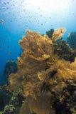 Corallo subacqueo Immagine Stock Libera da Diritti