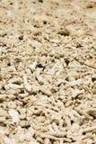 Corallo sulla sabbia Fotografia Stock