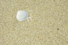 Corallo sulla sabbia Fotografia Stock Libera da Diritti