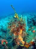Corallo variopinto Fotografie Stock