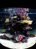 Coralls royalty-vrije stock afbeelding