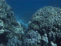 Coralreef en Mer Rouge. Photo libre de droits