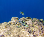 Coralreef_2 Royalty Free Stock Photography