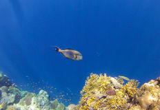 Coralreef_3 Stock Photos