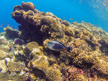 Coralreef_6 Royalty Free Stock Photo