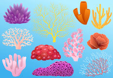 Corals. Collection of colorful corals isolated on blue background Royalty Free Stock Photo