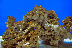 Corals Stock Photography