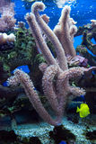 Corals. The underwater world of coral royalty free stock photo