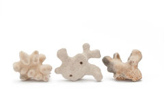 Corals. Three Different Shape Corals Isolated on White Background Royalty Free Stock Photography