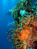 Corals Stock Photo