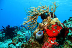 Corals against Blue Water Royalty Free Stock Images