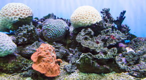 Corals against Surface Royalty Free Stock Photography