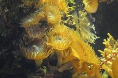 Corals in an aquarium Stock Image
