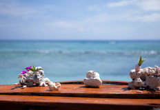 Corals on the bar Royalty Free Stock Image
