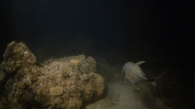 Corals and big fishes underwater stock video footage