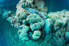 Corals and bottle outside umbria ship wreck in red sea Royalty Free Stock Image