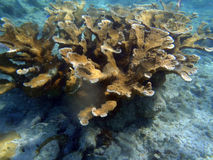 Corals in caribbean Royalty Free Stock Images