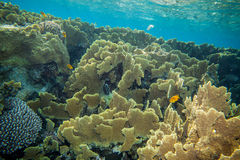 Corals castle. Underwater landscape. Red sea coral reef. Coral wall Stock Images