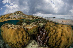 Corals and Clouds in Caribbean Stock Image