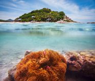 Corals, clownfish and palm island stock image