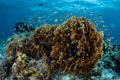 Corals and Colorful Reef Fish Stock Photo