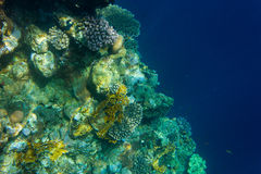 Corals and deep. Corals deep in the sea. Clear water. Egypt Stock Images