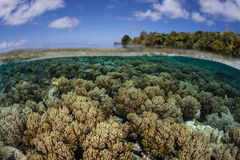 Corals on Edge of Barrier Reef. Corals grow on the edge of Palau's spectacular barrier reef. Palau, in Micronesia, is known for its high marine biodiversity and stock photography