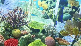 Corals and exotic marine fish. Ocean life. The oceanarium. Scene under water. Large aquarium. Wild nature. Tropical inhabitants stock video footage