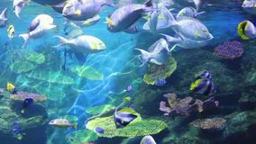 Corals and exotic marine fish. Ocean life. The oceanarium. Scene under water. Large aquarium. Wild nature. Tropical inhabitants stock video