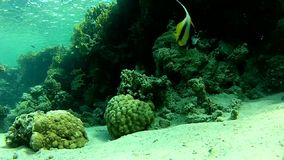 Corals. Fish and clear water. Diving. Underwater life fish on the bottom. The corals and the caves. Corals. Fish and clear water stock video