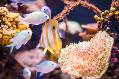 Corals and fish. Corals and fish in the depths of the sea Royalty Free Stock Images