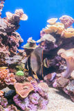 Corals and fish. Royalty Free Stock Image