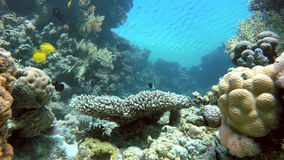 The corals and fish. Diving, Aqua. Coral reef. Exotic fishes. The beauty of the underwater world. Life in the ocean. Diving on a tropical reef. Submarine life stock video footage