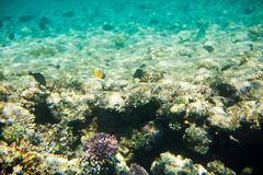 Corals and fish  in the Red Sea Stock Image