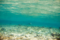 Corals and fish in the Red Sea Stock Photography