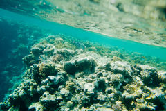 Corals and fish in the Red Sea Stock Images