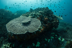 Corals and Fish in Tropical Pacific Stock Image