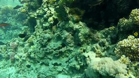 The corals and fish. stock video
