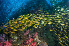 Corals and fish underwater in ocean. Of thailand Stock Photo