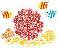 Corals and fishes. Vector clip-art illustration of red and yellow corals and striped fishes Royalty Free Stock Image