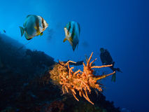 Corals, fishes and divers Stock Photo