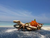 Corals and flowers. Corals on the beach Stock Images